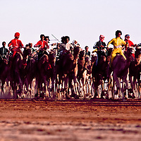 In March the annual camel race is held at Jinayderiah, outside Riyadh. Approximately 1700 camels race 21 kilometers.  All who finish are awarded prizes.