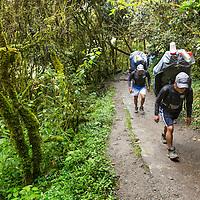 Peru, Piscacucho, Porters carrying load of backpacker's gear through rainforest near base of Dead Woman's Pass along Inca Trail to Machu Picchu along Urubamba River