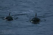 06: WINTER TOUR ORCA PORTRAITS