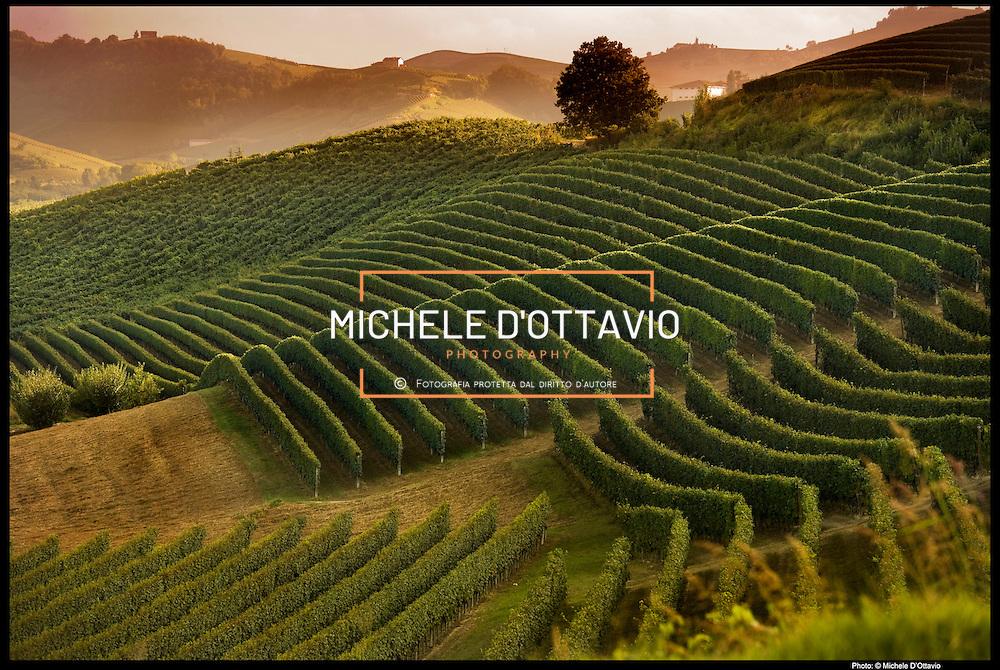 I paesaggi vitivinicoli di Langhe-Roero e Monferrato, in Piemonte, sono Patrimonio mondiale dell'umanità: il sì definitivo alla candidatura è arrivato dal comitato dell'Unesco riunito a Doha, nel Qatar. Il sito riconosciuto dall'Unesco è di tipo seriale, ovvero costituito da sei aree articolate all'interno dei confini delle Province di Alessandria, Asti e Cuneo e di 29 Comuni per un'estensione complessiva pari a 10.789 ettari.