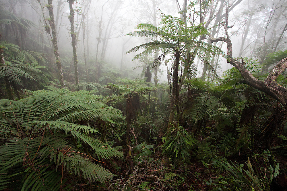 Cloudforest at around 1,600m in Macaya Biosphere Reserve on the Massif de la Hotte, Haiti