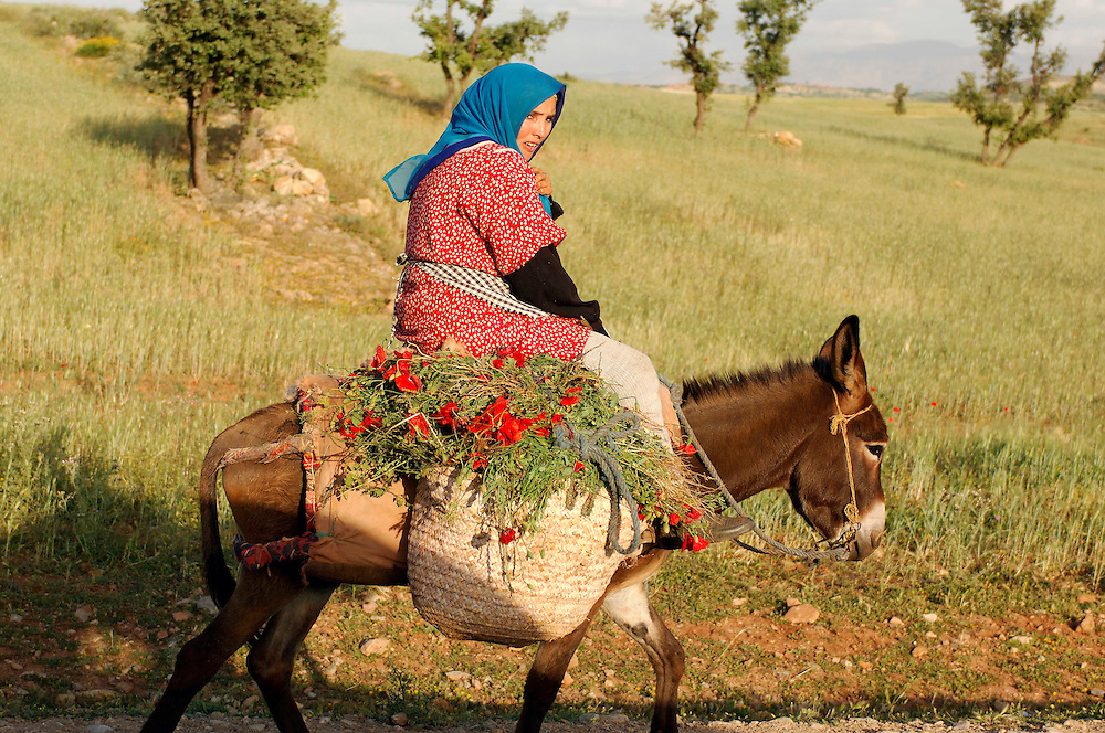 Woman riding Donkey, near Marrakesh, Morocco