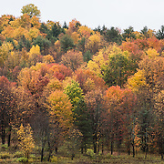 Mid October autumn foliage color, Corning, New York, USA.