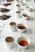 Tea tasting at the factory. Dambatenne Estate.