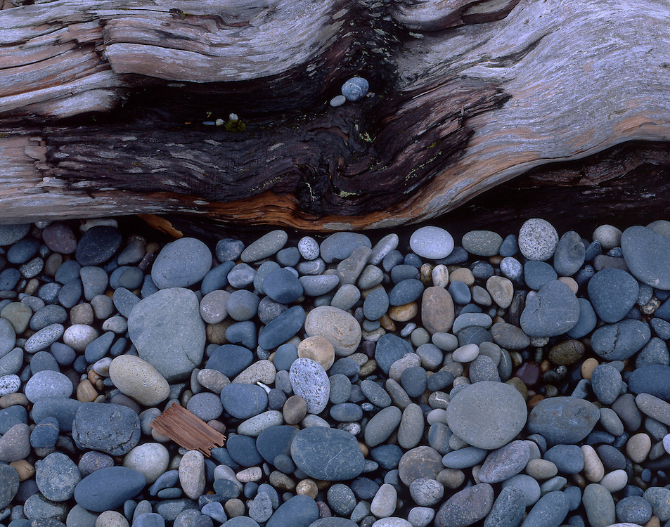Pebbles and wood, Naikoon Provincal Park, Queen Charlotte Islands, British Columbia, Canada