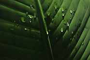Foliage & Vegetation