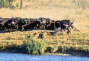 Battle at Kruger No. 17