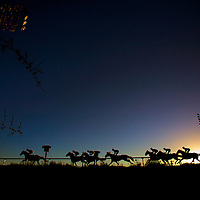 Horses race on December 14, 2013 at Betfair Hollywood Park in Inglewood, California . The Track is set to close permanetly on December 22, 2013 after operating since 1938 (Alex Evers/ Eclipse Sportswire)