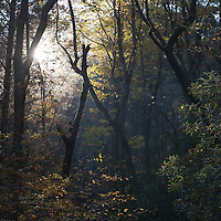 Fall emerges in the forest near Linville Falls, North Carolina