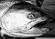 British Columbia Salmon Fishing