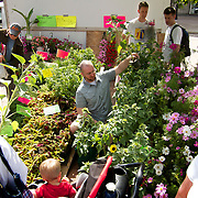 .Some of the flowers for sale at the farmers market. .The Dane County Farmers Market is held Saturday mornings from early April through early November on the Capitol Square in Madison, Wisconsin.