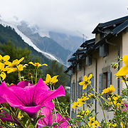 "Flowers in Chamonix, France. Mont Blanc galciers descend in the background. Published in Ryder-Walker Alpine Adventures ""Inn to Inn Alpine Hiking Adventures"" Catalog 2006-2009, 2011, 2012."