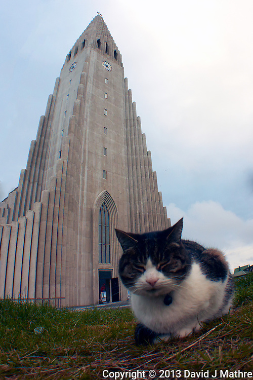 Cat in front of Hallgrímskirkja (church of Hallgrímur) in Reykjavik, Iceland. Image taken with a Nikon 1 V2 camera and 10 mm f/2.8 lens with an Olympus FCON-T01 fisheye adapter (ISO 160, 7.5 mm, f/4, 1/1000 sec).