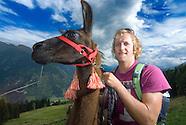 Lama trekking in Bad Gastein, Salzburgerland, Austria