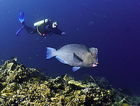 North Halmahera (North Malukkas) , Indonesia, Exploratory diving trip