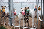 &quot;OK. Who's first? Raise your hand!&quot;<br /> Retired racers from the NJGAP December 2009 Adoption Intake.