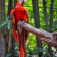 A colorful parrot perched on a tree limb
