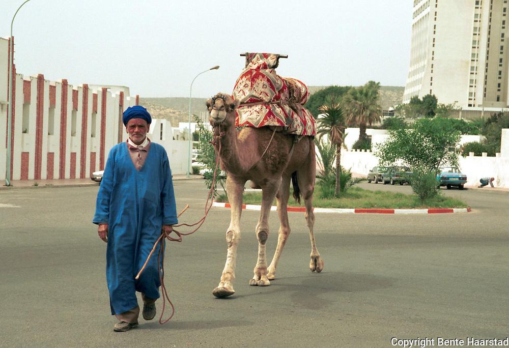 turistkamel, Agadir, Marokko..neg