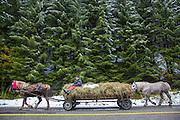 Horse cart, traditional transportation, farming community, Romania, carrying hay.