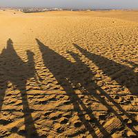Egypt, Cairo, Tourists on camel safari cast shadows in Sahara Desert near Great Pyramids of Giza at sunset