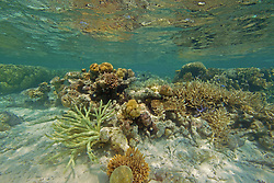 """A diversity of corals in """"The Aquarium"""", Clerke Lagoon at the Rowley Shaols."""