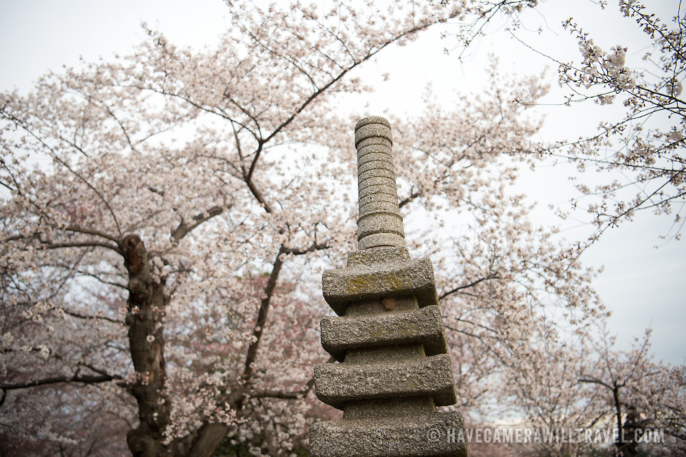 WASHINGTON DC--The 17th century Japanese Pagoda amongst the Japanese cherry blossoms next to the Tidal Basin in Washington DC.