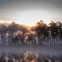 The sun rises behind a fog-enshrouded island at Long Pine Key pond in Everglades National Park, Florida. WATERMARKS WILL NOT APPEAR ON PRINTS OR LICENSED IMAGES.