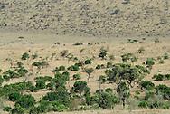 The vast extensions of the Masai Mara National Park. Kenya. Africa