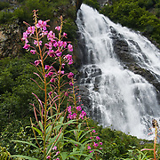 Horsetail Falls and pink blooms of fireweed, along the Richardson Highway in Keystone Canyon (mileposts 14-17), in the Chugach Mountains, near Valdez, southcentral Alaska, USA.