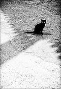Hydra, Greece, cat