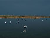 Outer Banks for Audubon Mag