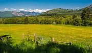 Yellow flowers paint a field along Hwy 9, near Prairie. North Cascades mountain ridge serves as a background.