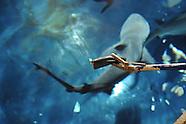 Aquatic Biology and Management Course Jenks Aquarium