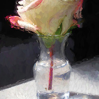 White and pink rose in a vase on a table.  Brushstroke effects have been added to give it the appearance of an oil painting.