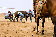 Wilsall Ranch Rodeo, Wild Cow Milking  Competition, Kurt Mraz, Cleve Swandal, Cassie Woosley, Dusty Holland, Lazy SR Ranch team, Montana
