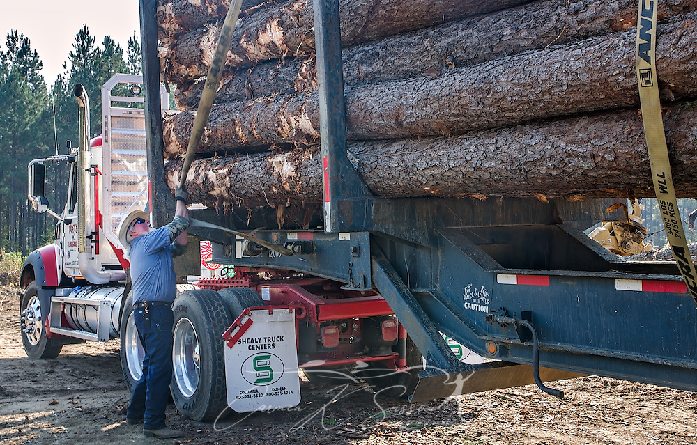 T.J. Branham, a driver with Tracy's Logging, tightens a strap on a load of loblolly pine, Nov. 16, 2016, in Steadham, S.C. The timber will be taken to a Georgia-Pacific plant. (Photo by Carmen K. Sisson)