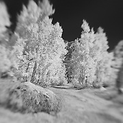 North Lake Road Wide View - Lensbaby - Infrared Black & White