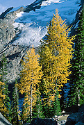 """Sextet Ridge Glacier and larch trees in the fall at Bugaboo Provincial Park, British Columbia, Canada. The Bugaboos are a range in the Purcell Mountains, which are a subrange of the Columbia Mountains, which are west of the Rocky Mountain Trench. (Some USA maps label the """"Percell Mountains"""" where their southern limit protrudes into the states of Idaho and Montana.) The igneous Bugaboo intrusion of 135 million years ago cooled into hard crystalline granite and was scraped into spires by glaciers eroding surrounding rock dating from 600 million to 1 billion years ago. Published in """"Light Travel: Photography on the Go"""" book by Tom Dempsey 2009, 2010."""