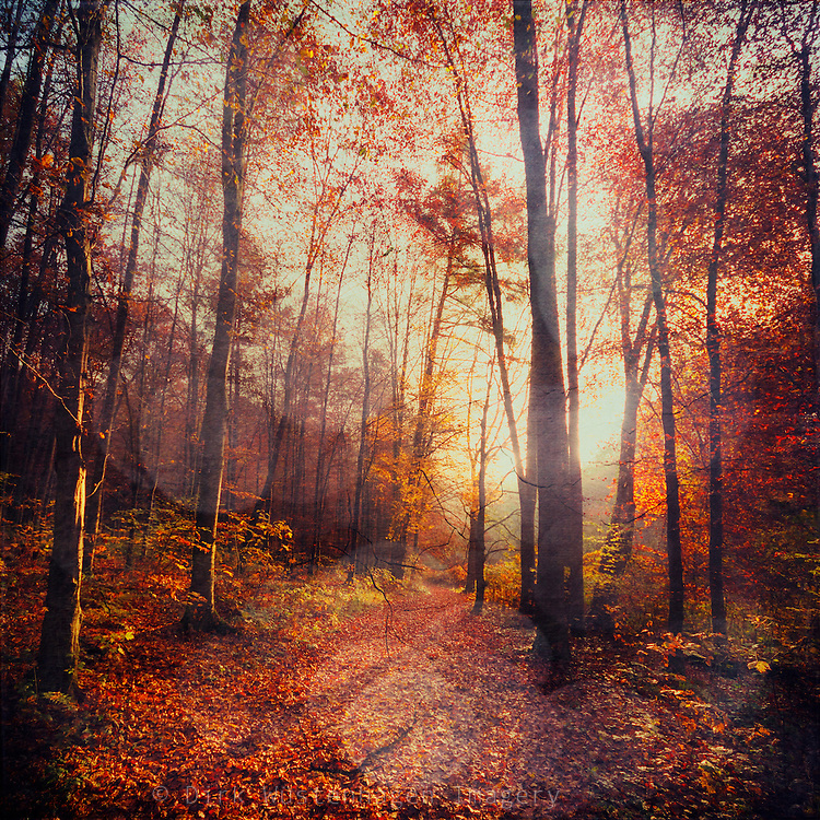 Forest path in early morning light with red glowing leaves.<br />