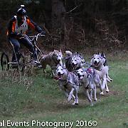 8 & 6 Dog