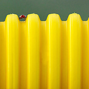 Joe Imel/Daily News.A lady bug tries to climb plastic tubing on a fence at Bowling Green Junior High School Tuesday. SAY SOMETHING ABOUT WEATHER