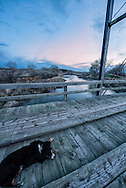 Australian Shepherd dog, Goffena Bridge, Musselshell River, east of Roundup, Montana, dusk