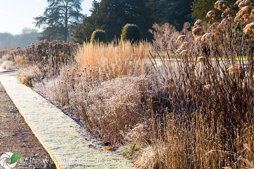 Frosted grasses and herbaceous perennials in a border in the Italian Garden at Trentham Gardens, Staffordshire - photographed in January