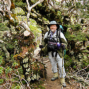A hiker (tramper) explores forest on the Tuatapere Hump Ridge Track, in Fiordland National Park, South Island, New Zealand. In 1990, UNESCO honored Te Wahipounamu - South West New Zealand as a World Heritage Area.