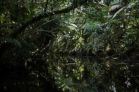 Anangu creek, Yasuni National Park, Orellana Province, Ecuador
