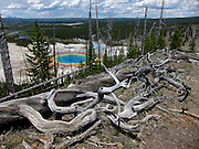 Dead trees seen at the top of a hill overlooking the Grand Prismatic Spring in Yellowstone's Midway Geyser Basin