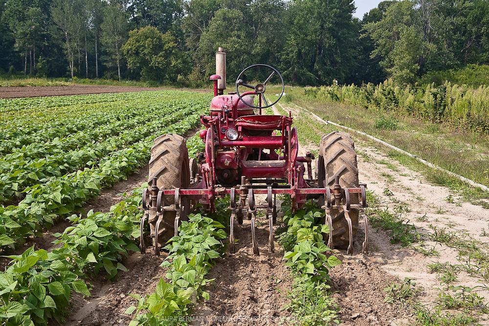 A working Farmall 140 tractor by Intewrnational Harvester, in a farm field.