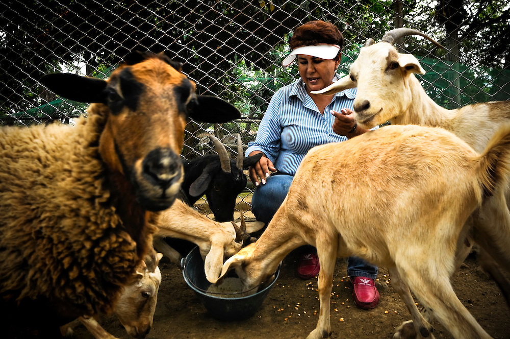 Ana Julia Torres, 50, feeds goats at the Villa Lorena Animal refuge she founded in Cali, Colombia. She is known for showing a lot of affection toward the injured, abandoned and/or abused animals that live at Villa Lorena, frequently petting, kissing and telling them how special they are, despite their age, deformities or injuries.