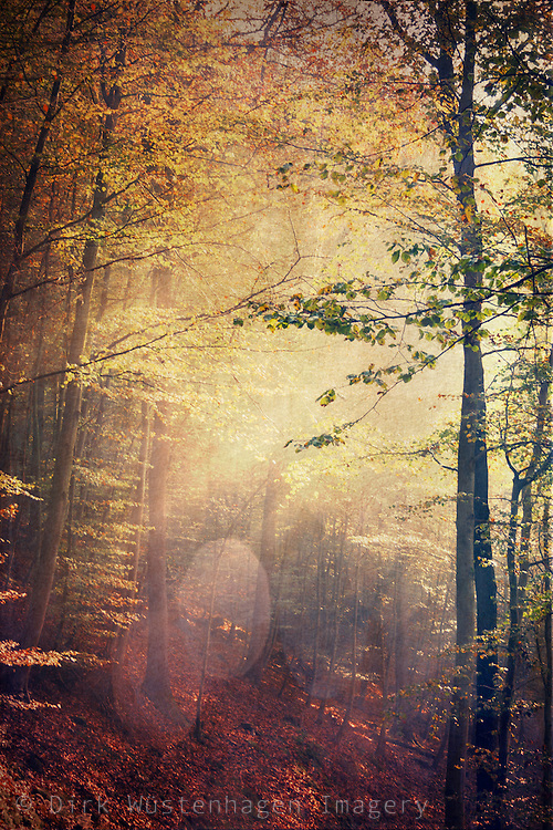 Autumnly forest scenery with light breaking through the foliage<br />