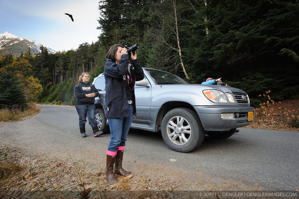 A bald eagle (Haliaeetus leucocephalus) is seen flying over Allison Stuart as she photographs other bald eagles along the Chilkoot River near Haines, Alaska. Looking on is fellow student Maggie Martin (left). Stuart and Martin were part of a class team conducting a count of bald eagles as part of  their citizen science class project at the Haines School. Behind the car are Ella Bredthauer, Haines middle school science teacher and Meredith Pochardt, Takshanuk Watershed Council project manager. The project is part of a field-based for-credit class, sponsored by the Takshanuk Watershed Council, in which students participate in research studies and learn about field data collection. Under the guidance of Pam Randles, Takshanuk Watershed Council Education Director, students count bald eagles in the Chilkat River Valley using spotting scopes at 10 locations and present their data at the Bald Eagle Festival held in November in Haines. During late fall, bald eagles congregate along the Chilkat River to feed on salmon. This gathering of bald eagles in the Alaska Chilkat Bald Eagle Preserve is believed to be one of the largest gatherings of bald eagles in the world.